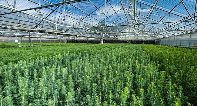 nursery-greenhouse-seedlings