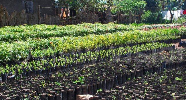 tree-seedlings1